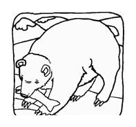 Orso da colorare 49