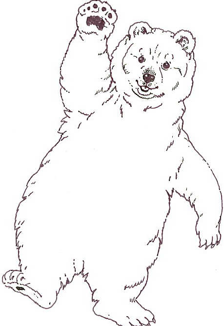 Orso da colorare 140