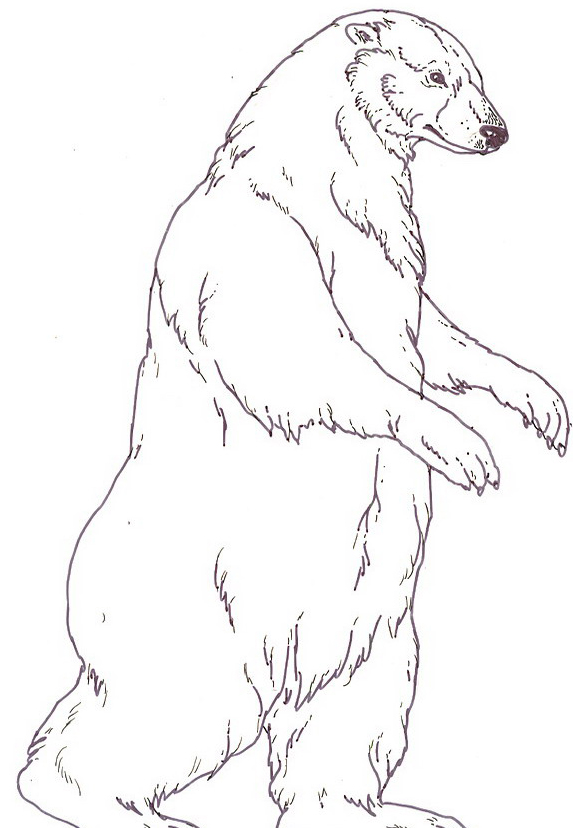 Orso da colorare 142