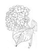 Fiore da colorare 336