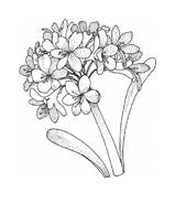 Fiore da colorare 337