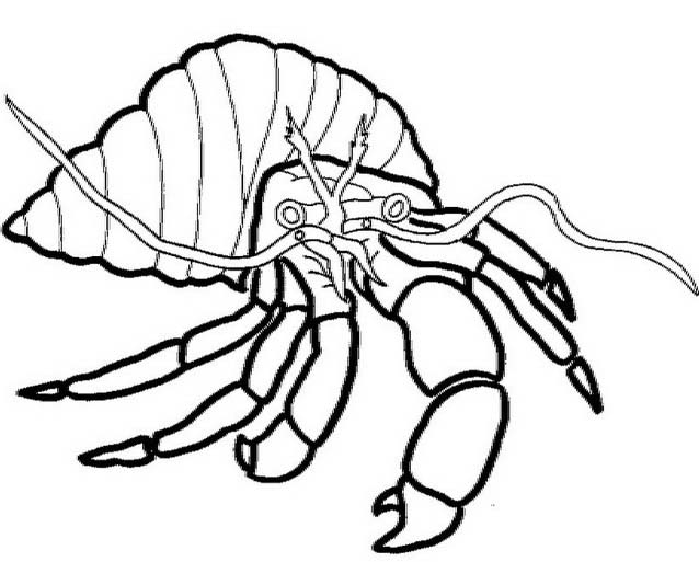 Crostaceo da colorare 36