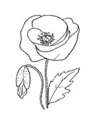 Fiore da colorare 339