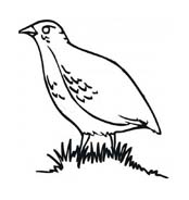 Uccello da colorare 194