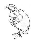 Uccello da colorare 196