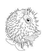 Pesce da colorare 88