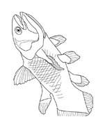 Pesce da colorare 93