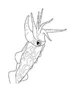 Pesce da colorare 96