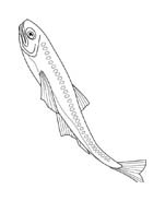 Pesce da colorare 115