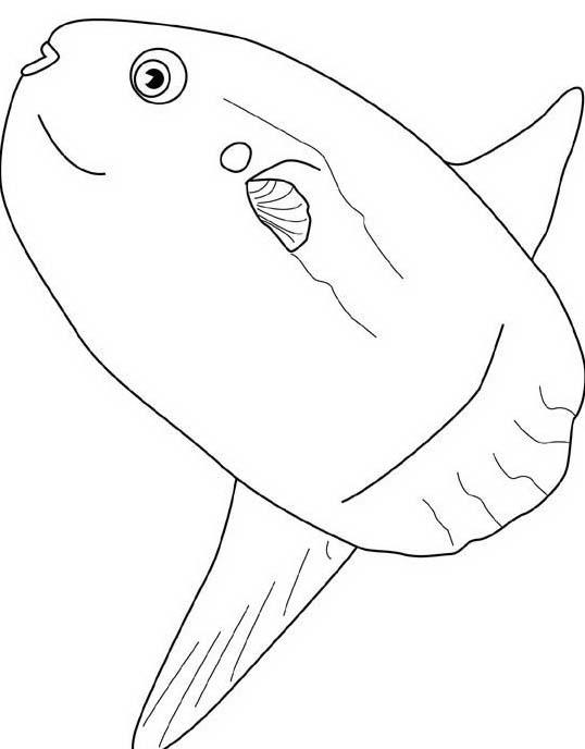 Pesce da colorare 122
