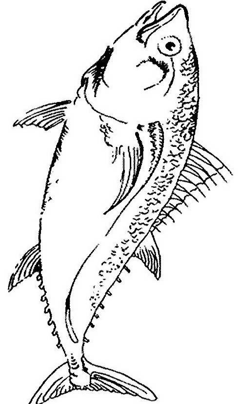 Pesce da colorare 193