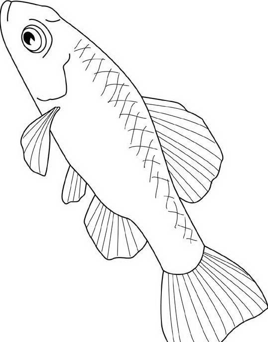 Pesce da colorare 206