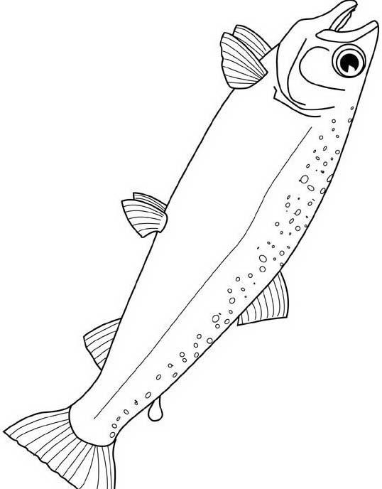 Pesce da colorare 209