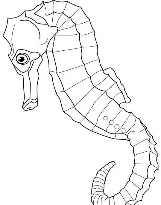 Pesce da colorare 216