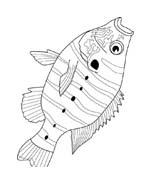 Pesce da colorare 221