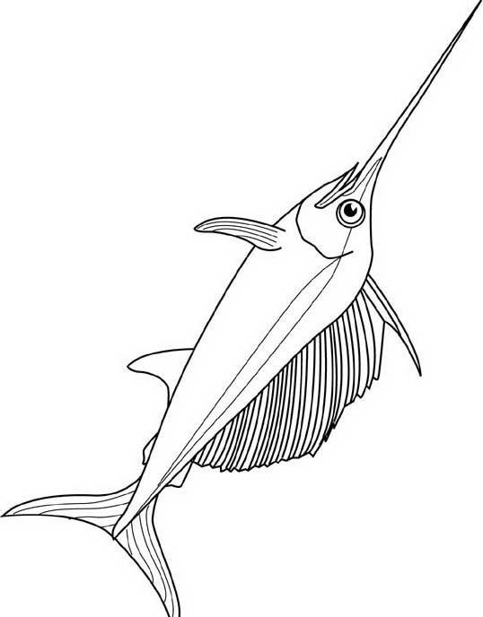 Pesce da colorare 222