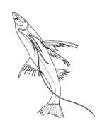 Pesce da colorare 224