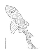 Pesce da colorare 227
