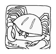 Crostaceo da colorare 41