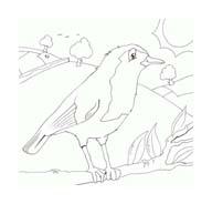 Uccello da colorare 198