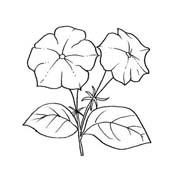 Fiore da colorare 341