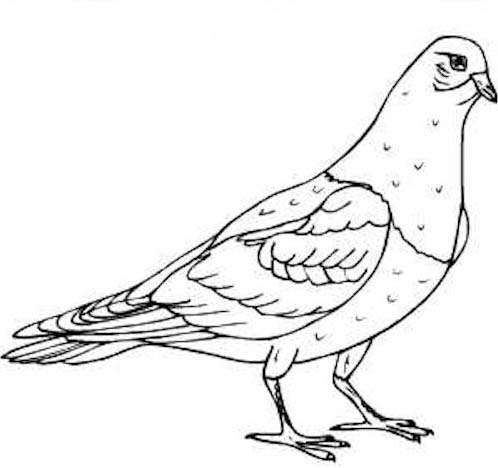 Uccello da colorare 199
