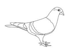 Uccello da colorare 200
