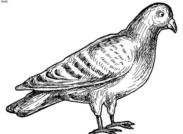 Uccello da colorare 201