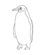 Pinguino da colorare 27