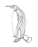 Pinguino da colorare 32