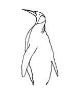 Pinguino da colorare 35