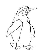 Pinguino da colorare 36
