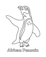 Pinguino da colorare 39