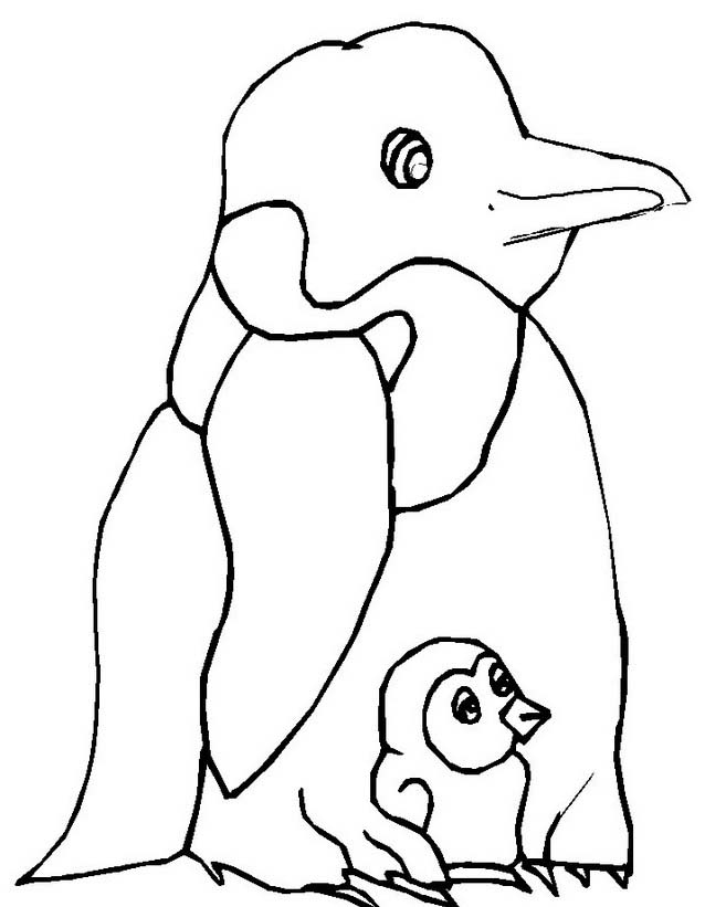 Pinguino da colorare 40