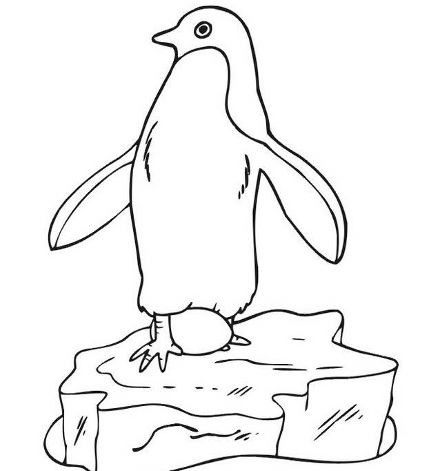 Pinguino da colorare 53