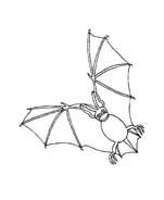 Pipistrello da colorare 15