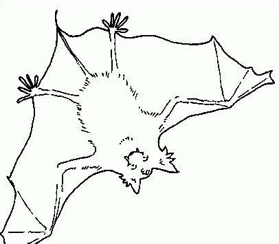 Pipistrello da colorare 24