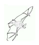 Pipistrello da colorare 25