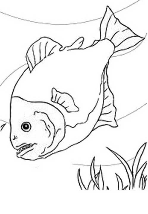 Pesce da colorare 229