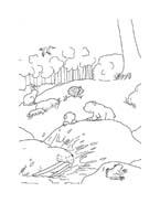 Piuma il piccolo orsetto polare da colorare 25