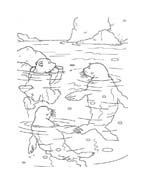 Piuma il piccolo orsetto polare da colorare 33