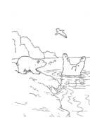 Piuma il piccolo orsetto polare da colorare 36