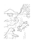 Piuma il piccolo orsetto polare da colorare 37