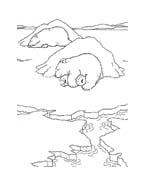 Piuma il piccolo orsetto polare da colorare 38
