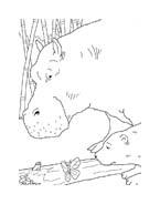 Piuma il piccolo orsetto polare da colorare 48