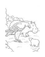 Piuma il piccolo orsetto polare da colorare 54