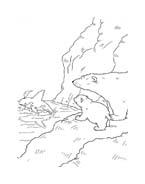 Piuma il piccolo orsetto polare da colorare 57