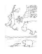 Piuma il piccolo orsetto polare da colorare 59
