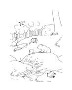 Piuma il piccolo orsetto polare da colorare 78