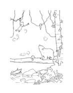 Piuma il piccolo orsetto polare da colorare 93